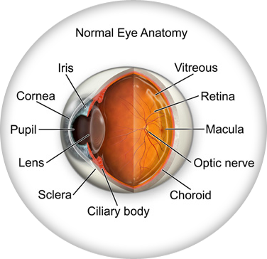 Eye Anatomy - Eye Doctor, Eye Care in Northeast Texas, Louisiana ...